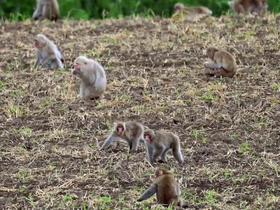 都会化する野生動物たちと害獣駆除対策の銘柄研究