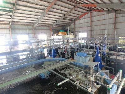 養殖産業に見る産官学の動きと投資の可能性